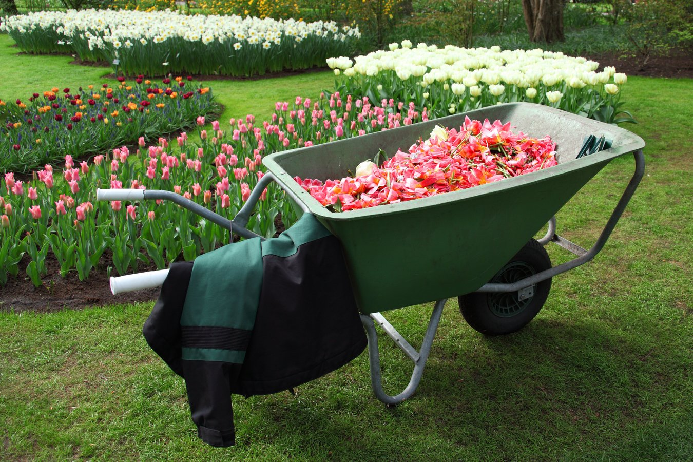 work-grass-plant-lawn-wheel-cart-1159034-pxherecom